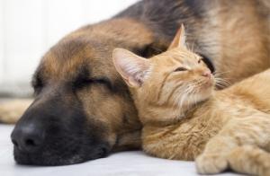 Revisión completa y vacuna para perros o gatos