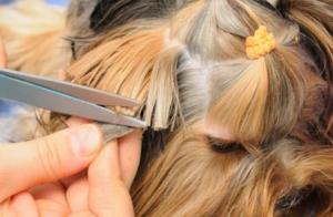 2 sesiones de peluquería canina con baño y corte